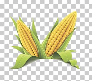 Corn On The Cob Maize Sweet Corn Flint Corn Cereal PNG