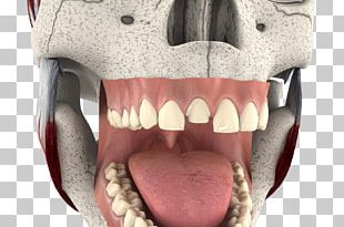 Cosmetic Dentistry Tooth Whitening Jaw Mouth PNG