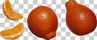 Tangelo Vegetarian Cuisine Mandarin Orange Grapefruit PNG