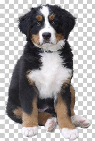 Dog Puppy Pet Cat PNG