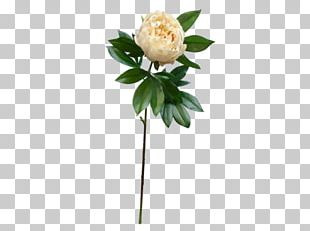 Peony Cut Flowers Artificial Flower Flower Bouquet PNG