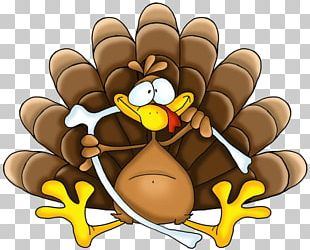 Thanksgiving Holiday Turkey PNG