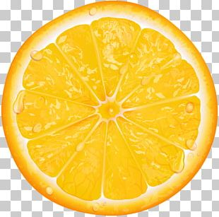 Lemon Orange Slice PNG