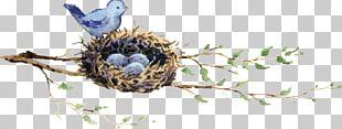 Edible Bird's Nest Duck European Robin Bird Nest PNG