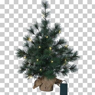 Spruce Christmas Tree Fir Christmas Ornament PNG