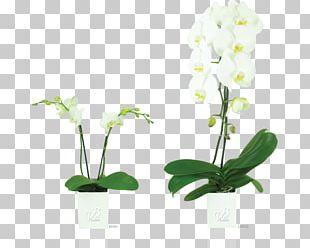 Moth Orchids Floral Design Flowerpot PNG