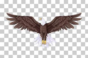 Bald Eagle Flight Drawing PNG