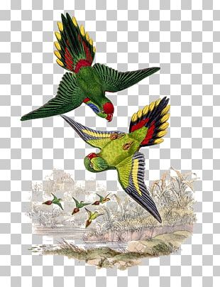 Bird Parrot Beak Psitteuteles Feather PNG