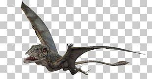 Dimorphodon Velociraptor Dinosaur Darwinopterus Pterosaurs PNG