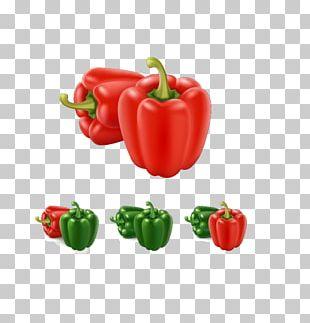 Bell Pepper Paprika Illustration PNG