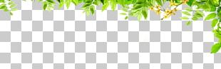 Graphic Design Green Pattern PNG