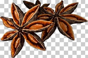 Star Anise Spice PNG