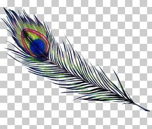 Feather Bird Parrot Drawing Pavo PNG
