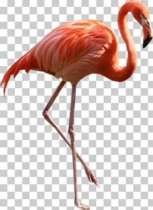 Flamingo PNG