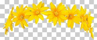 Wreath Crown Yellow Flower PNG