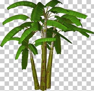 Banana Tree PNG