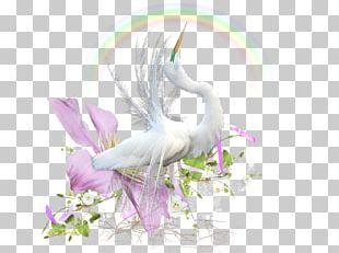 Water Bird Beak Desktop PNG