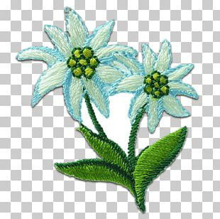 Flower Edelweiss Embroidered Patch Embroidery Green PNG