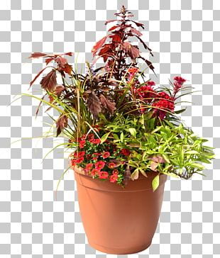 Plant Flowerpot Flower Box Homestead Gardens PNG