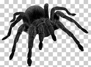 Spider Brown Widow Halloween PNG