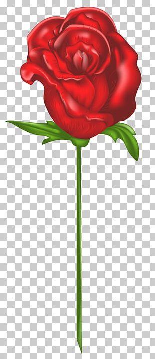 Garden Roses Roses PNG