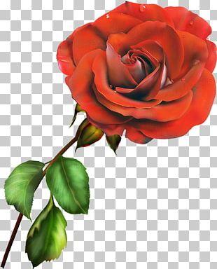Garden Roses Centifolia Roses Floribunda Blue Rose PNG