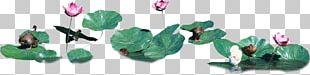 Leaf Nelumbo Nucifera PNG