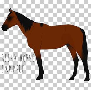 Appaloosa Mustang American Paint Horse American Quarter Horse Arabian Horse PNG