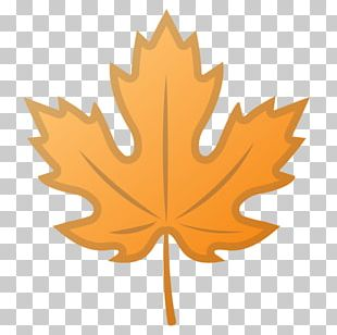 Maple Leaf Autumn Leaf Color Flag Of Canada Sycamore Maple PNG
