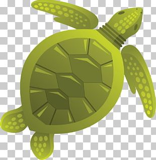Sea Turtle Tortoise Jellyfish PNG