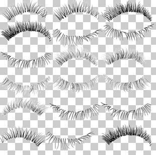 Eyelash Extensions PNG