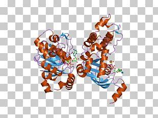 Cystic Fibrosis Transmembrane Conductance Regulator Mutation ΔF508 Gene Membrane Protein PNG