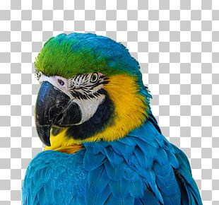 Parrot Bird Blue-and-yellow Macaw Scarlet Macaw Military Macaw PNG