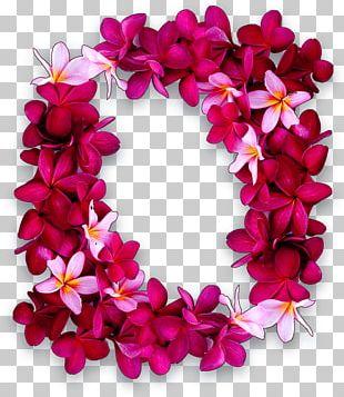 Maui Lei Day Hawaiian Puka Shell PNG