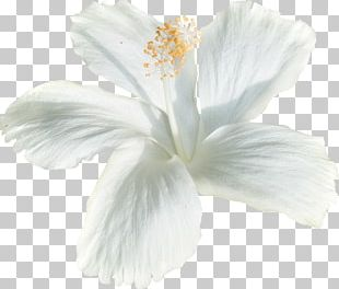 White Flower Birthday Holiday PNG