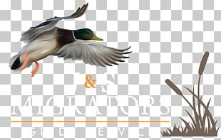 Duck Goose Mallard Waterfowl Hunting PNG
