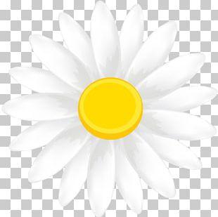 Daisy Family Flower Petal Transvaal Daisy Yellow PNG