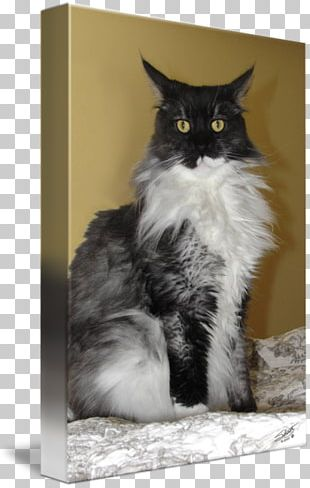 Whiskers Norwegian Forest Cat Maine Coon Domestic Short-haired Cat Domestic Long-haired Cat PNG