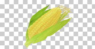 Corn Soup Corn On The Cob Vegetarian Cuisine Maize Sweet Corn PNG
