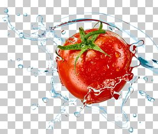 Tomato Fort Lauderdale Beach Ozone Air Purifier Vegetable PNG