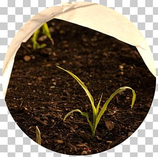 Cold Frame Gardening Row Cover Elderberry PNG