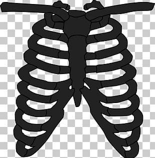 Rib Cage Human Skeleton Anatomy T-shirt PNG