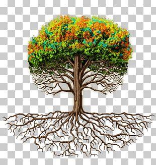Branch Root Tree Trunk Flowerpot PNG