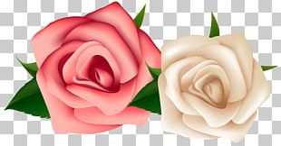 Rose White Pink Flowers PNG