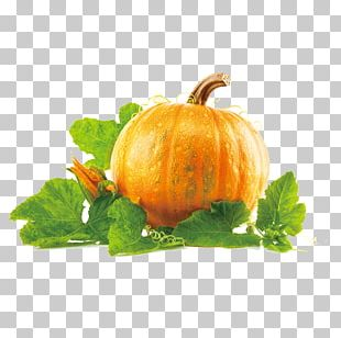 New Hampshire Pumpkin Festival Pumpkin Pie PNG