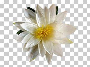 Artificial Flower Lilium Plant Petal PNG