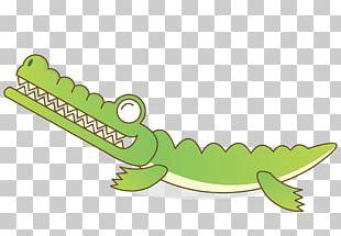 Crocodile Alligator Cartoon PNG