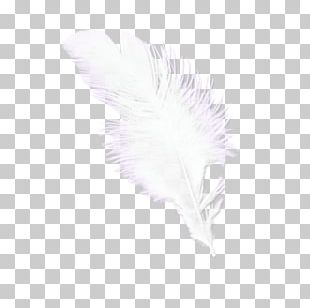 Feather Pattern PNG