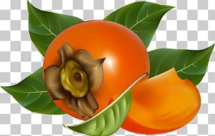 Japanese Persimmon Fruit PNG