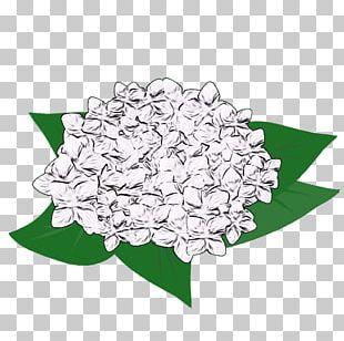 French Hydrangea Illustration Petal Design Flower PNG